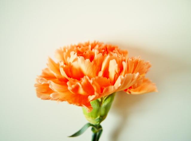 カーネーションオレンジ