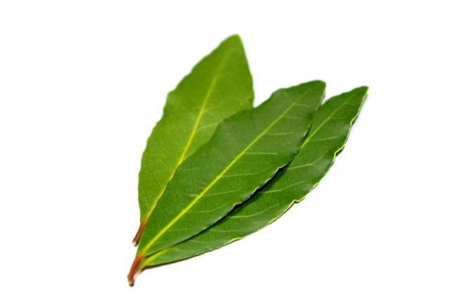 月桂樹の葉